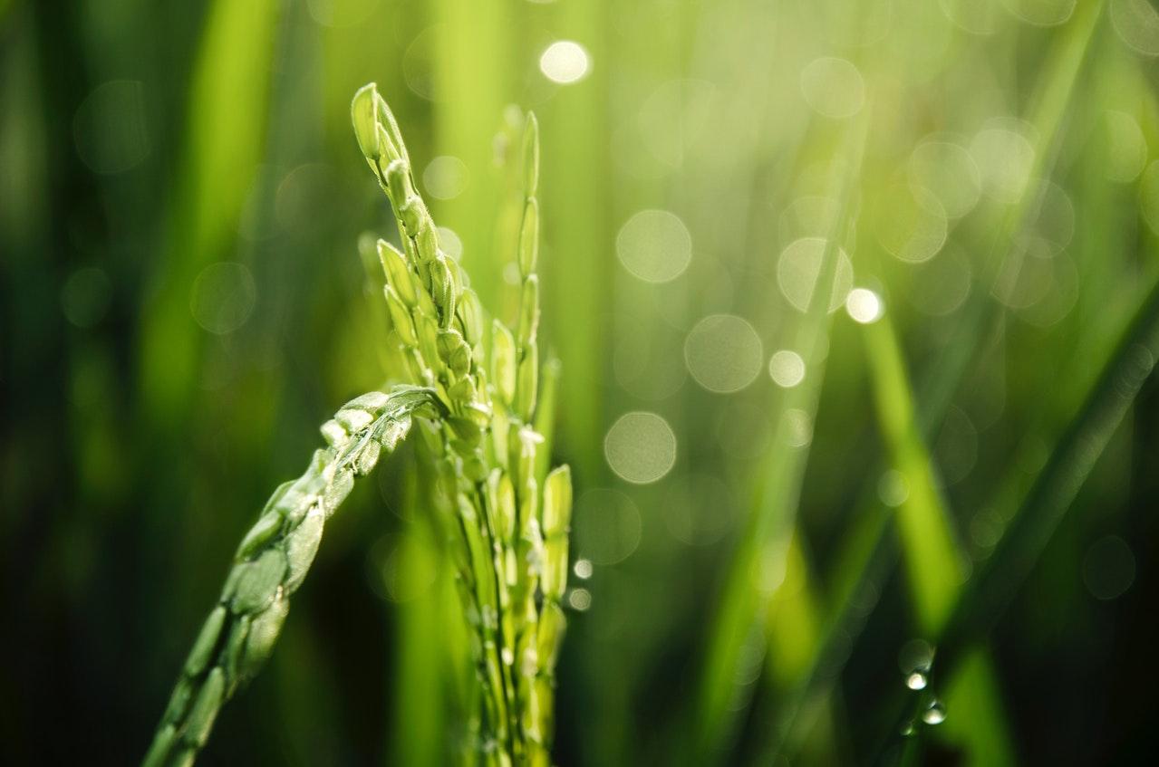 Przypowieść o kąkolu – interpretacja